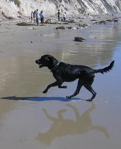 dog_at_beach