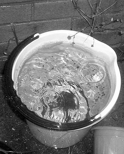 garden_rain_bucket_19135_l