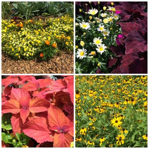 Farm2home15, Moss Mountain flowers, Rhonda Franz, Captain Mom