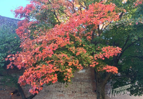 what children can learn from simple pleasures of fall